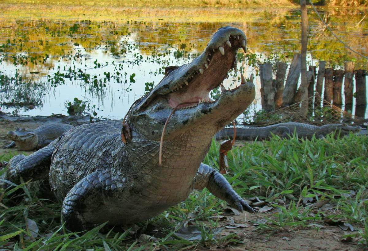 Pantanal Express – MS