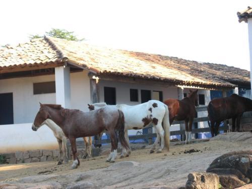 Cabreuva 073